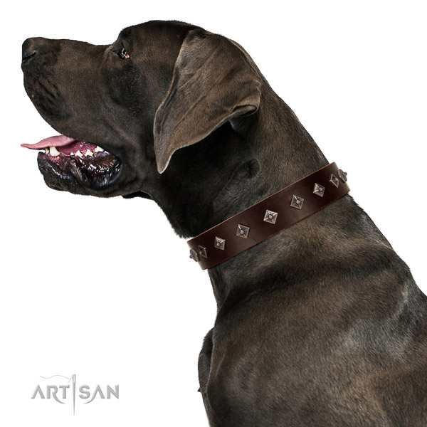 New elegant walking brown leather Great Dane collar with chic decorations