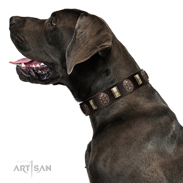 Extraordinary Brown Leather Great Dane Collar with Strong Hardware