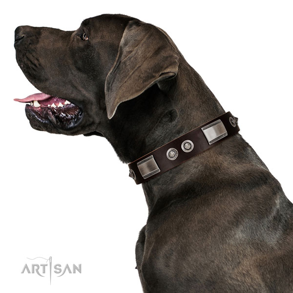 Adjustable leather Great Dane collar for walking