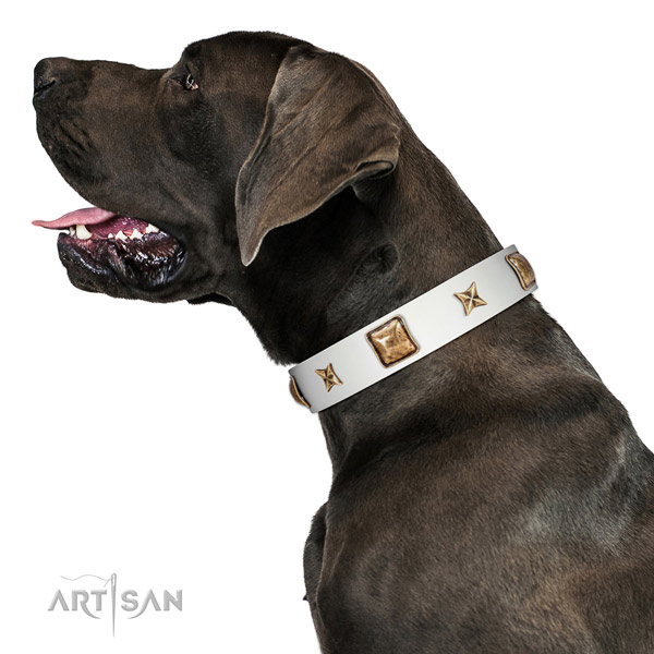Wonderful Artisan leather Great Dane collar for better