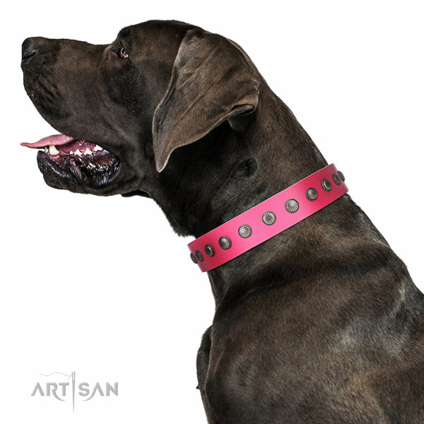 Artisan leather Great Dane collar for perfect control