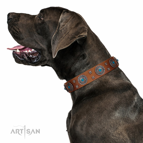 Extraordinary walking tan leather  Great Dane collar with chic decorations