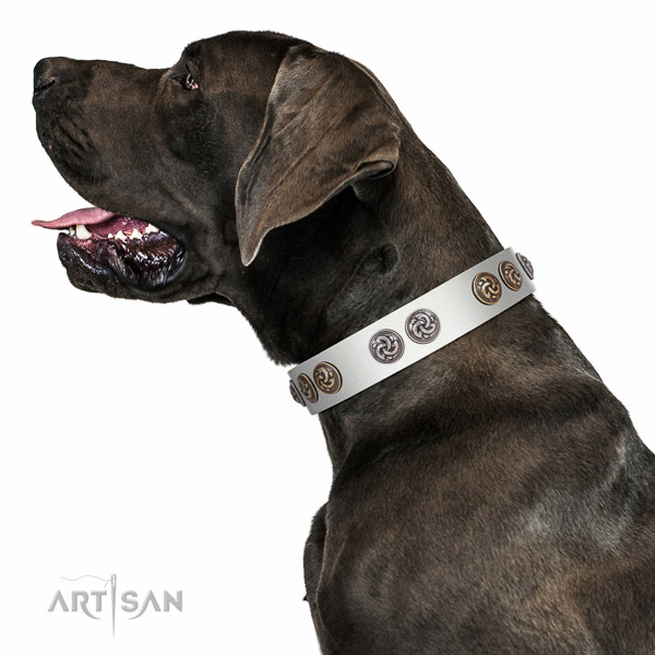 Leather Great Dane collar with rust resistant adornments