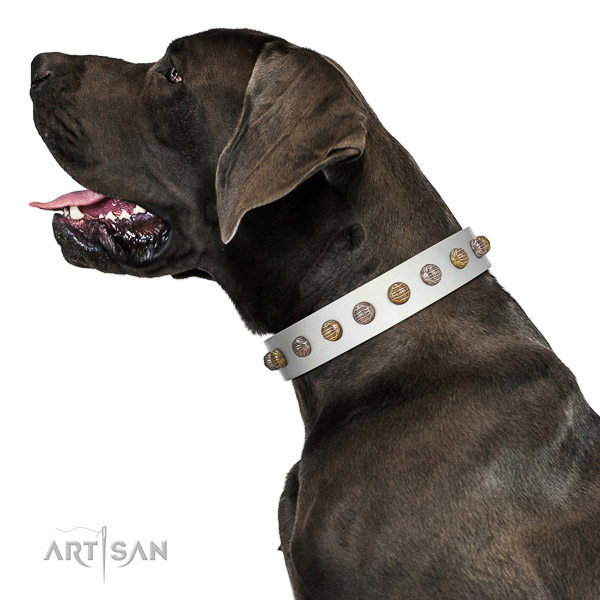 Extraordinary walking white leather Great Dane collar