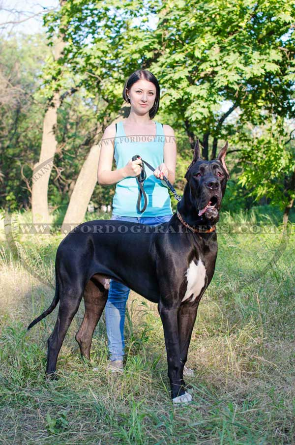 What Are Great Danes Bred For Great Dane Painted Leather Dog