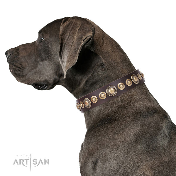 Great Dane fashionable full grain leather dog collar with embellishments
