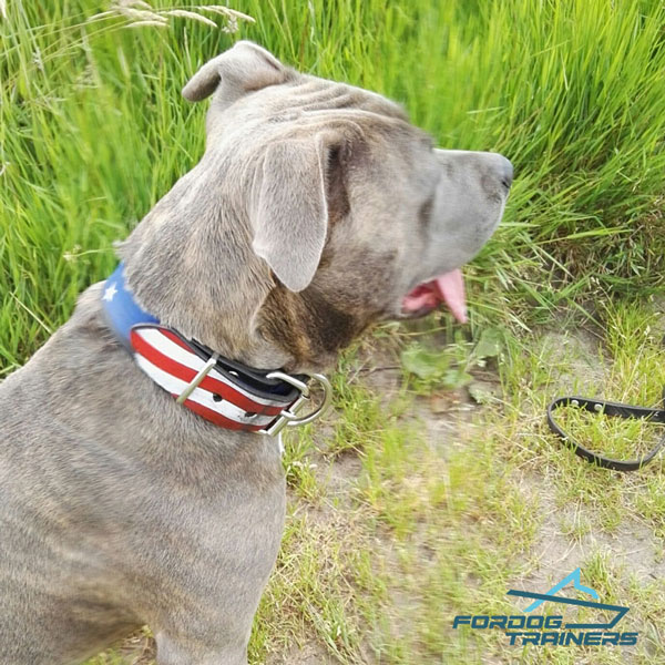 Hand painted Collar for Your Patriotic American Staffy