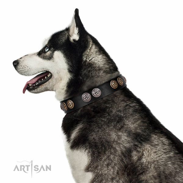 Walking top-notch quality walking leather Husky collar
