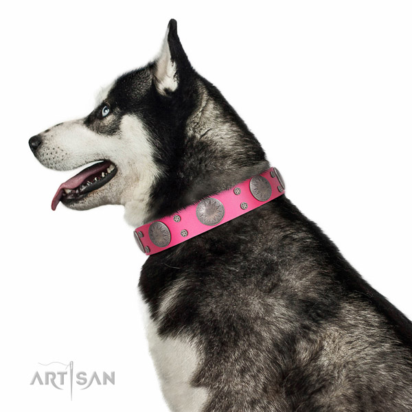 Decorated leather Husky collar for comfortable walking