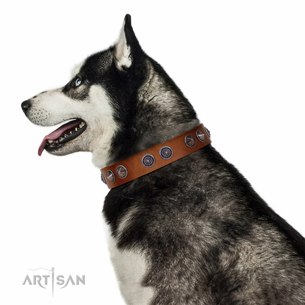 Extraordinary walking tan leather Husky collar with chic decorations