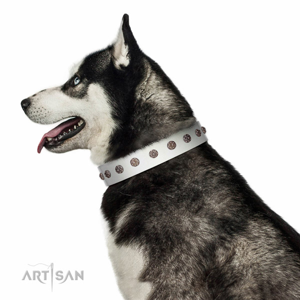 Extraordinary walking white leather Husky collar