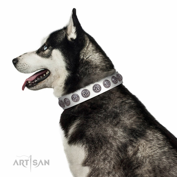Extraordinary walking white leather Husky collar with chic decorations