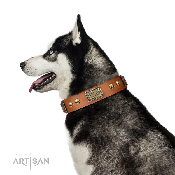 Husky fancy walking dog collar of exquisite quality genuine leather