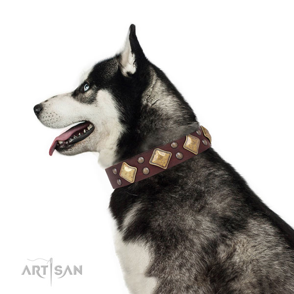 Husky adorned full grain leather dog collar with adornments