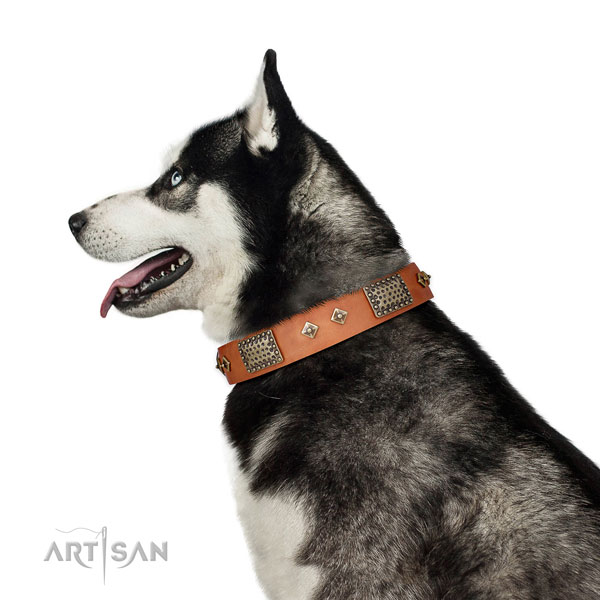 Husky fancy walking dog collar of top notch quality leather