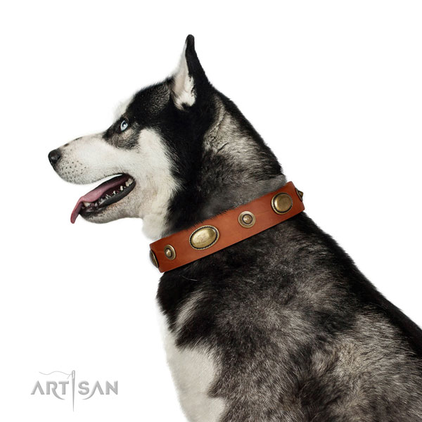 Husky easy wearing dog collar of remarkable quality leather