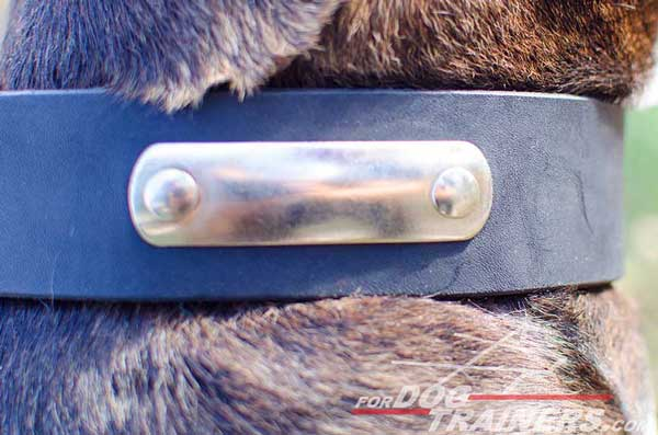 Pitbull Collar wtih Special Tag for Identification