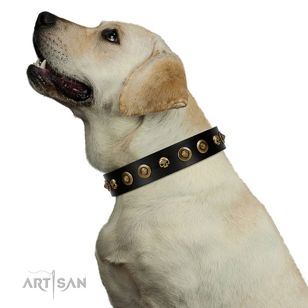 Comfortable leather Labrador collar for better handling during walks