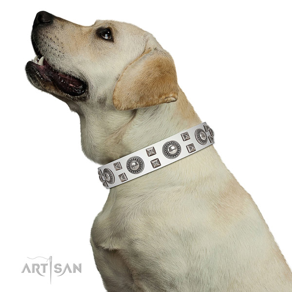 Extraordinary walking leather Labrador collar with chic decorations