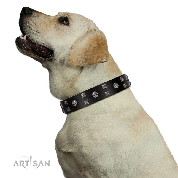 Delux walking black leather Labrador collar with modern decorations