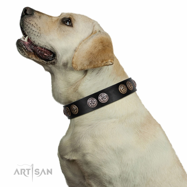 Extraordinary walking black leather Labrador collar with chic decorations