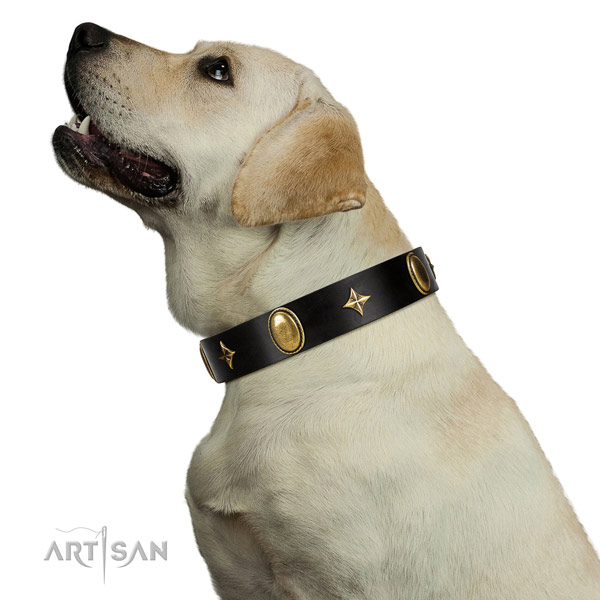 Extraordinary walking black leather Labrador collar with stars and ovals