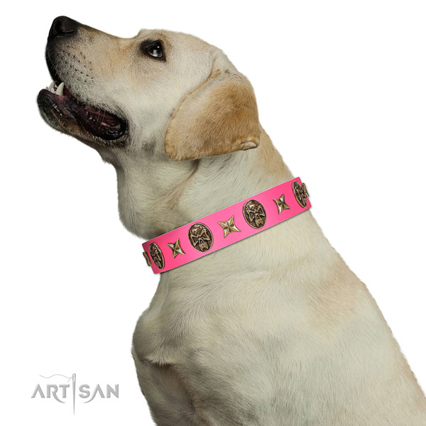 Gentle to Touch Genuine Leather Collar for Labrador Daily Walks