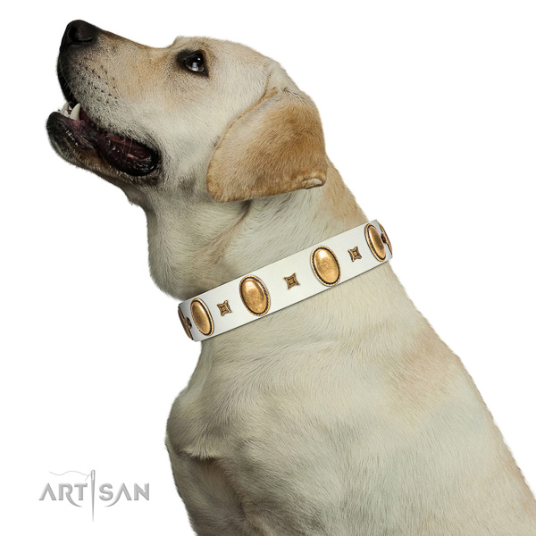 Extraordinary walking white leather Labrador collar with chic decorations