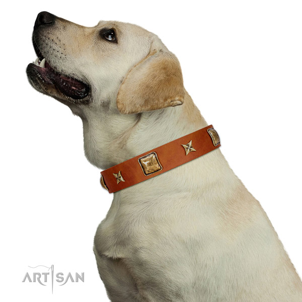 Easy adjustable Labrador Artisan leather collar for comfortable wear