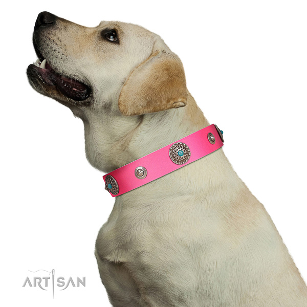 Perfect walking pink leather Labrador collar for modern