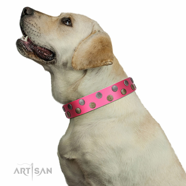 Artisan leather Labrador collar for perfect control