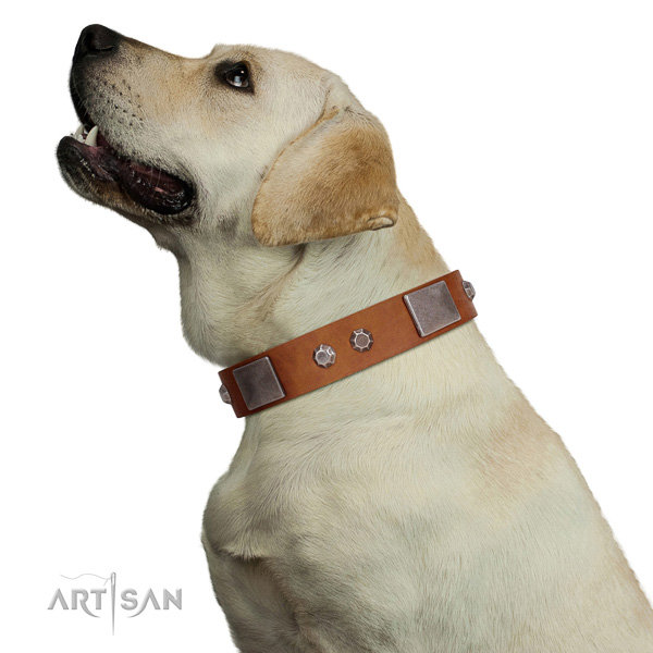 Extraordinary walking tan leather Labrador collar with
