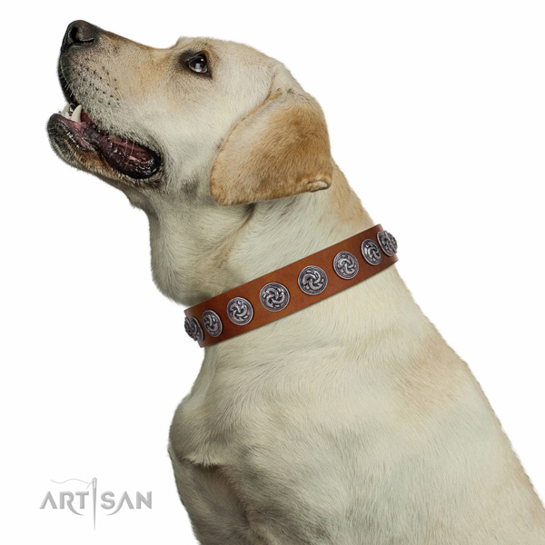 Tan Labrador Collar of Soft Leather for Comfortable Walks