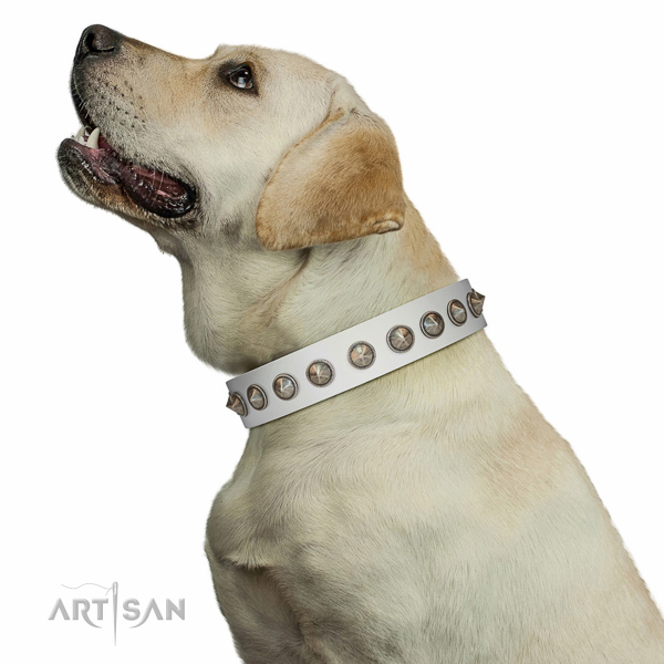 Extraordinary walking white leather Labrador collar with decorations