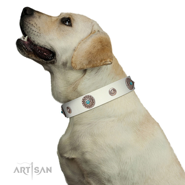 Walking leather Labrador collar in stunning design