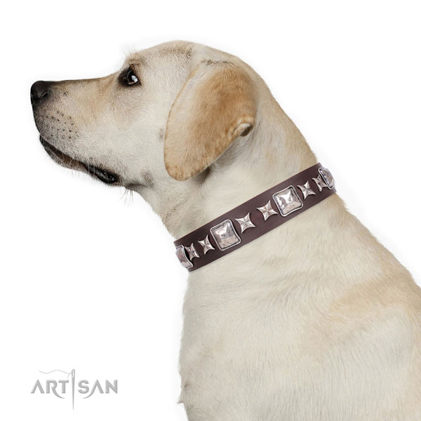 Labrador fashionable leather dog collar with embellishments