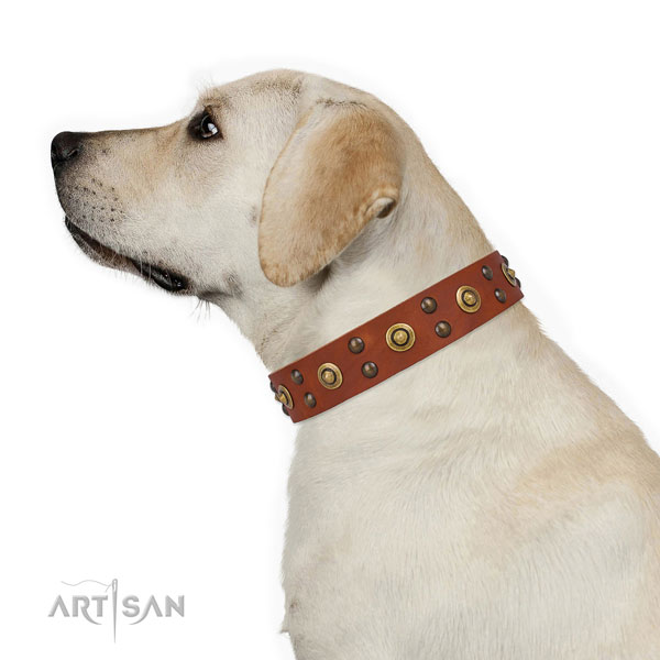 Labrador everyday walking dog collar of top quality natural leather