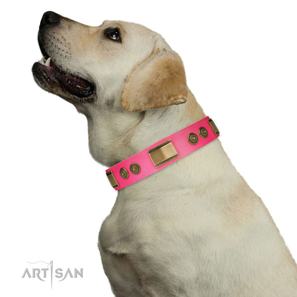 Labrador walking dog collar of trendy leather