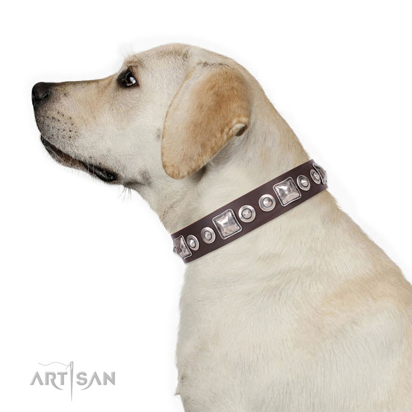 Labrador adorned leather dog collar with embellishments