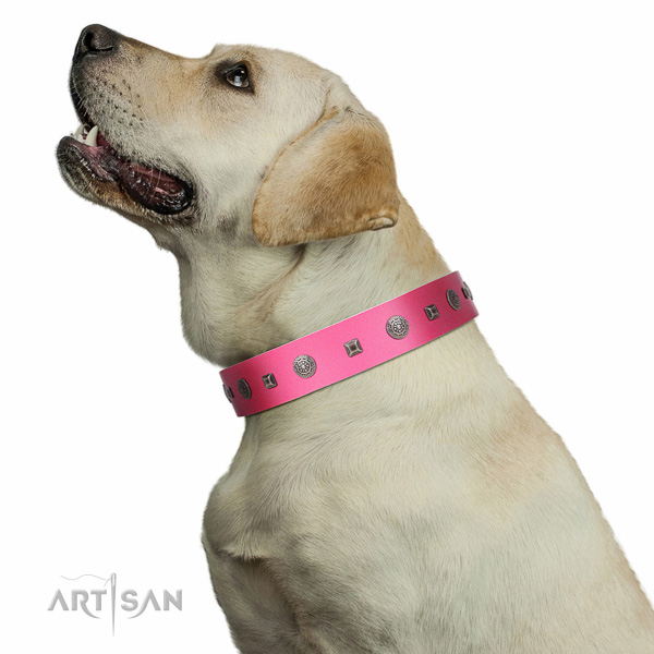Extraordinary walking pink leather Labrador collar with chic decorations