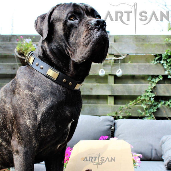 Chief Look Super Stylish in Cane Corso Leather Collar