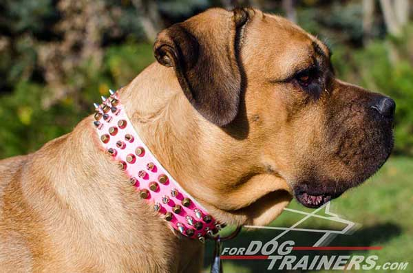 Hand-Made Stylish Leather Cane Corso Collar with Fancy Decorations