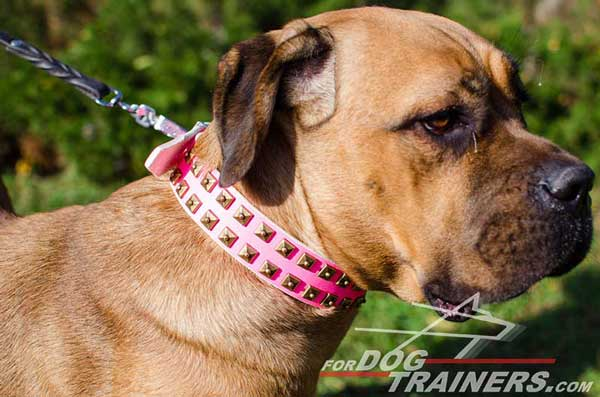 Handcrafted Designer Pink Walking Leather Cane Corso Collar