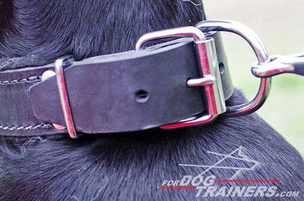 Strong rust proof nickel fittings for Doberman leather collar