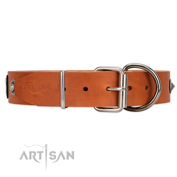 Walking Tan Dog Collar with Traditional Chrome-plated Buckle