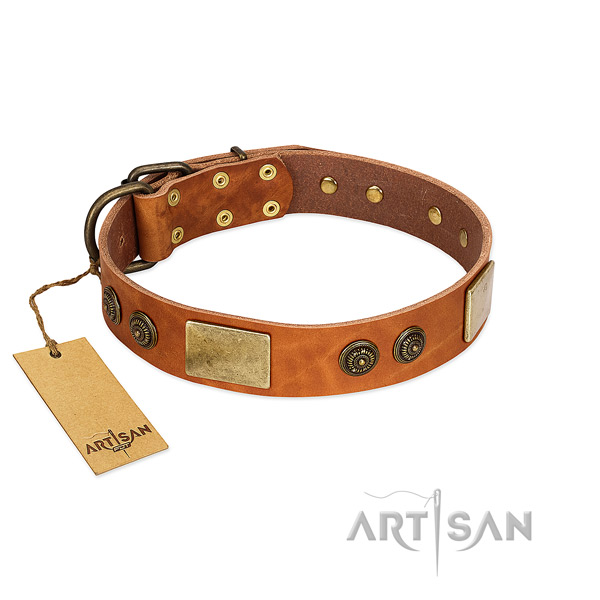 Designer Tan Leather Dog Collar Adorned with Gold-like Plates