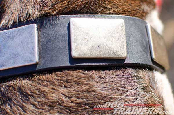 Old massive nickel plates for leather collar for Pitbull
