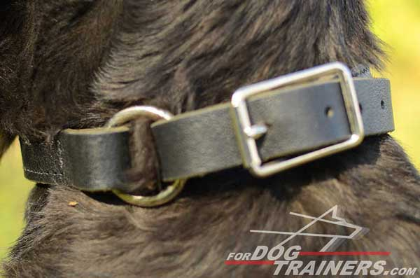 Corrosion Resistant Fittings of Leather Choke Dog Collar