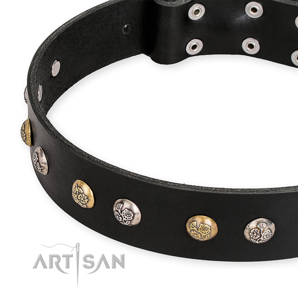 Black leather dog collar with riveted hardware