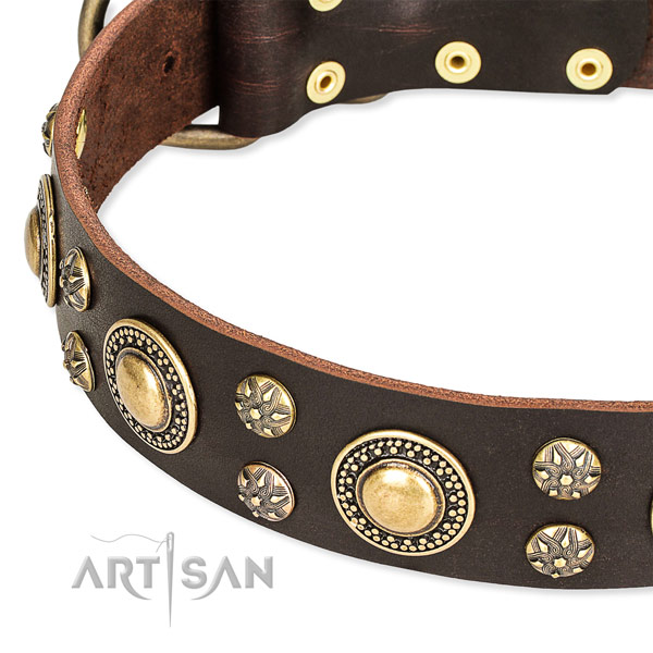 Trendy brown leather dog collar